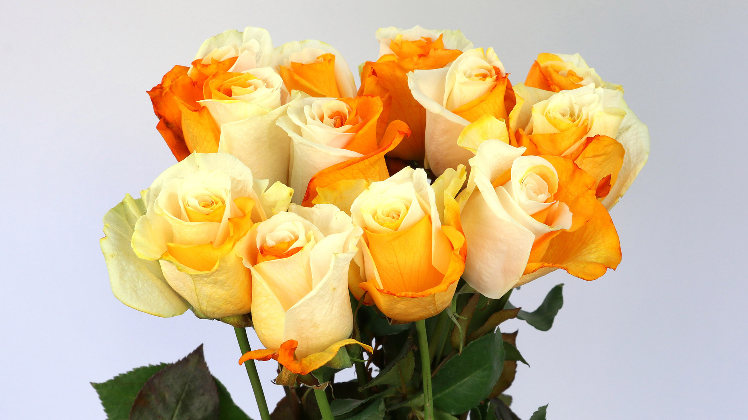 We Build Communication - Barile Flowers